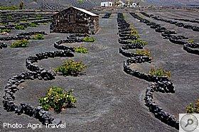 Vinos Do Lanzarote Agni Travel