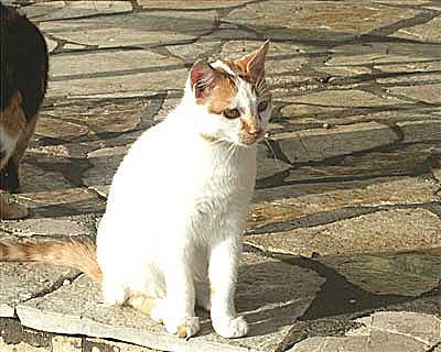 Corfu Cat Rescue