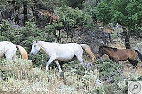 HORSES of Mount Ainos, HORSES of Mount Ainos, Wildlife - Flora and Fauna, Kefalonia Travel Guide